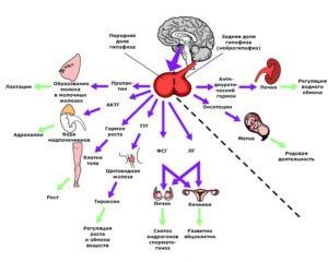 гормональные причины миомы матки